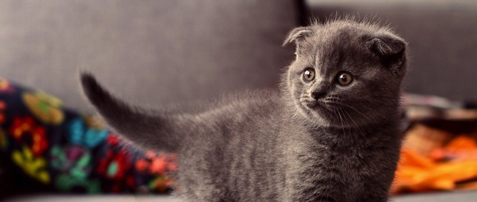 Минчанка: купила на элитной выставке породистого котенка, а потом пришлось его лечить. Организаторы: почему вас не смутила низкая цена?