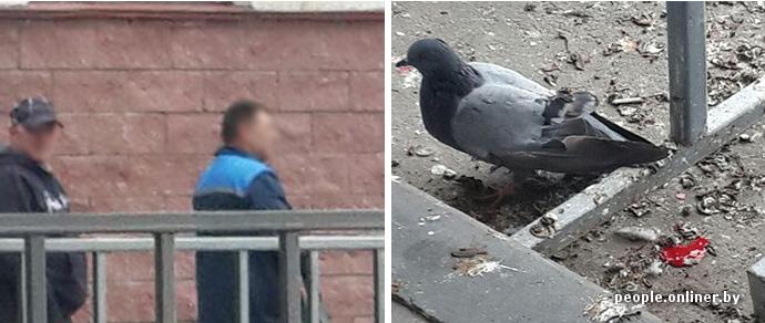 """Минчане: «В """"Каменном Логе"""" голубей расстреливали на глазах у всей очереди»"""