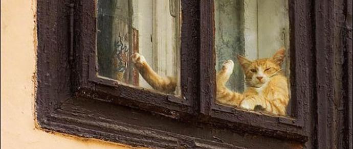 Домашние частные фотографии взрослых женщин в возрасте с большими окнами — pic 10