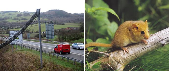 В Британии шторм снес мост, возведенный  за 245 тысяч евро для мышей