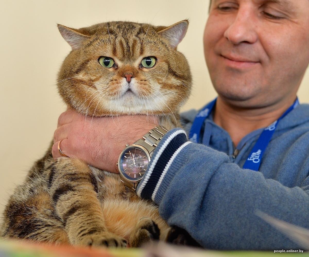 Самый маленький кот в мире картинки