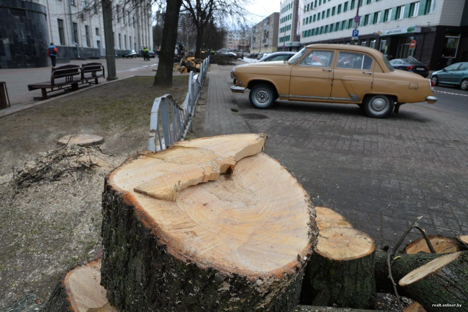образец заявления на уборку деревьев во дворе