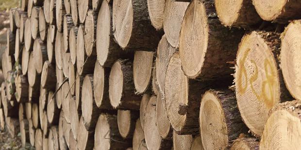 От белорусской деревообработки требуют выйти на прибыльную работу в 2017 году