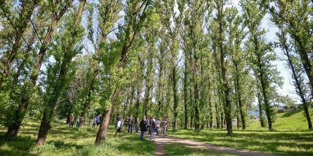 В Котовке, где планируют строить костел, снят запрет на вырубку деревьев. Активисты организовали дежурство