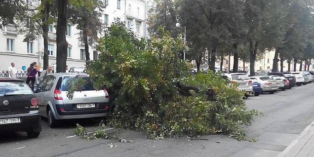 Фотофакт: на улице Комсомольской дерево упало на парковку