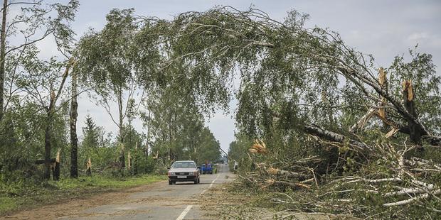 Последствия июльского урагана планируют устранить к 1 ноября, пока лесхозы привели в порядок треть пострадавших территорий