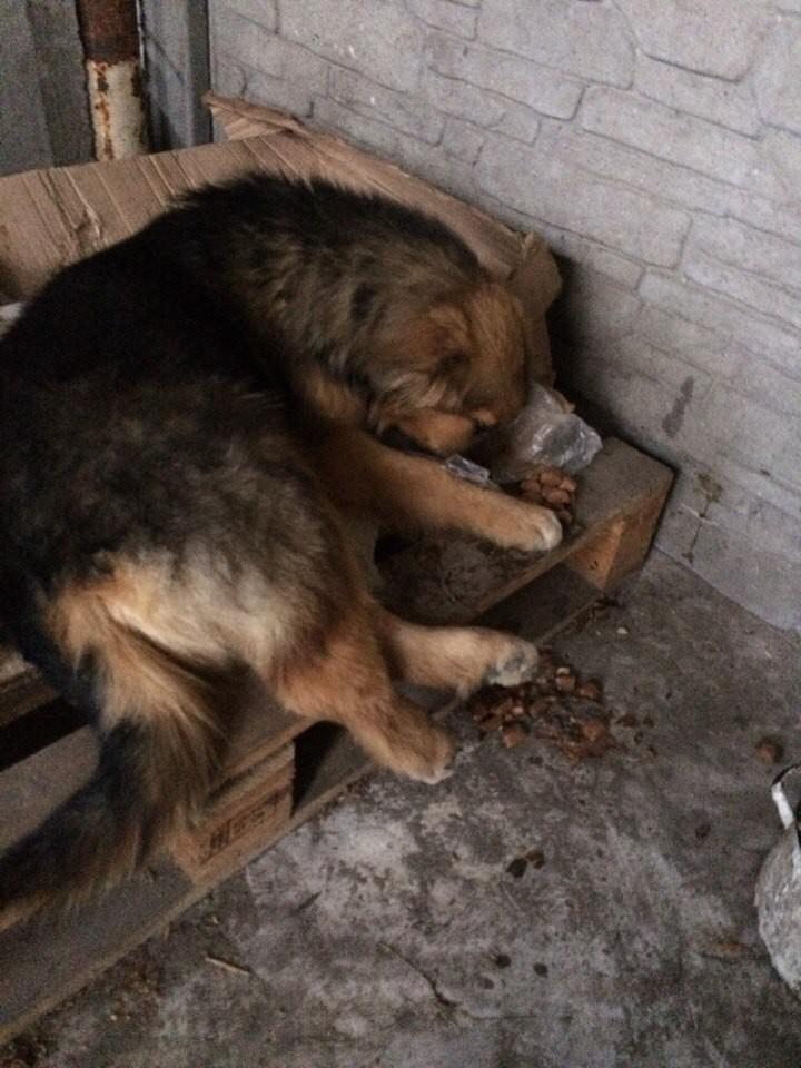 Волонтеры: «Только немцы решили приютить бездомных белорусских животных, граждане стали возмущаться»