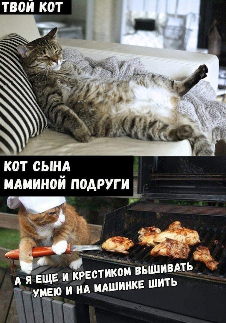 Картинки мемы приколы про котов, мужчине доброе утро