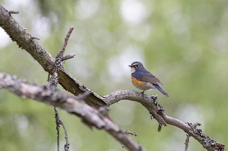 Обнаружена птица, которая никогда не попадалась в руки орнитологов Беларуси