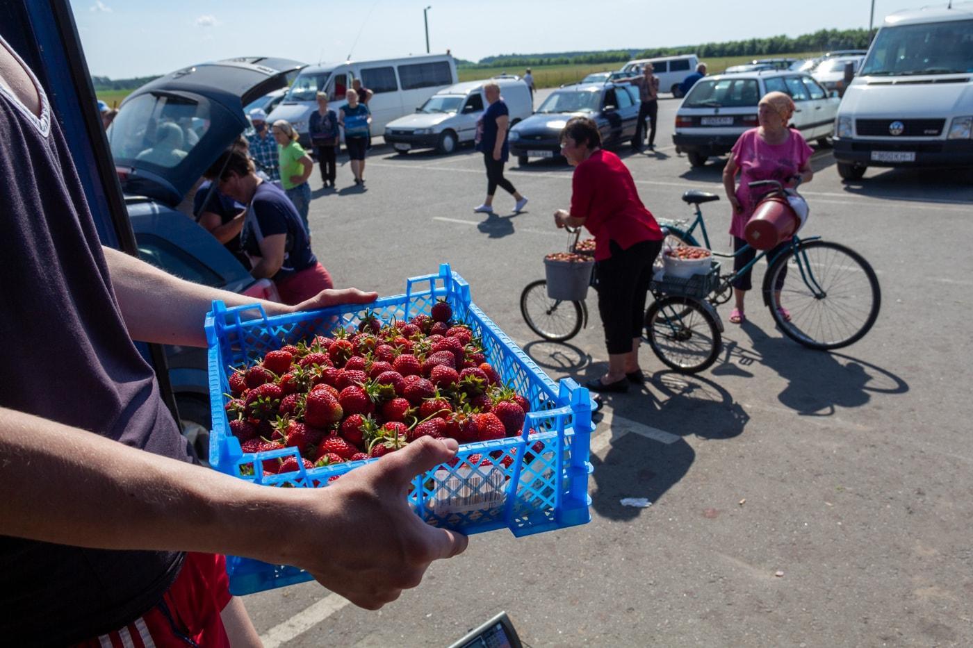 Сколько можно заработать в клубничной столице Беларуси