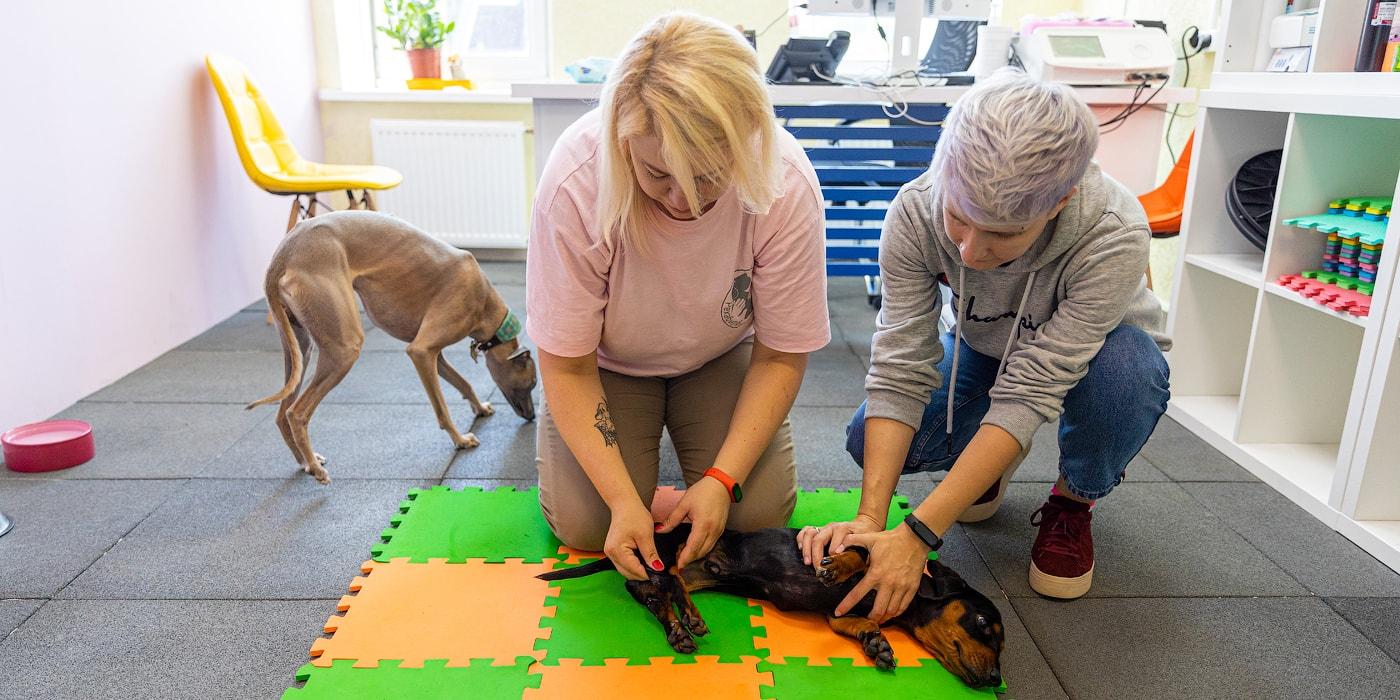 Центр реабилитации для животных Рехабилис
