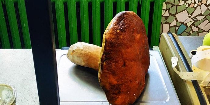Фотофакт: в стародорожском лесу грибник нашел боровик тяжелее килограмма