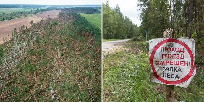 На Гомельщине ветер положил 90 гектаров леса: видео с квадрокоптера(видео)