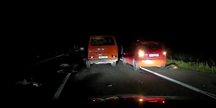 Ночью под Минском машина разбросала стадо кабанов(видео, дополнено)