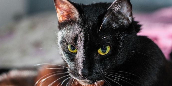«Симба воскресла из мертвых». Семья кремировала кошку, а та вернулась домой живой