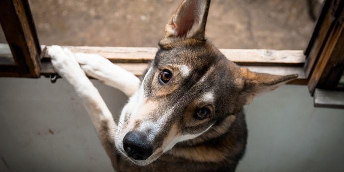 Возбуждено уголовное дело в отношении гомельчанина, который подозревается в том, что сбросил собаку с многоэтажки (обновлено)