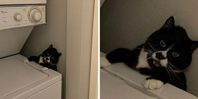 От люстры до вентиляции. Вот в какие странные и неожиданные места забираются домашние кошки
