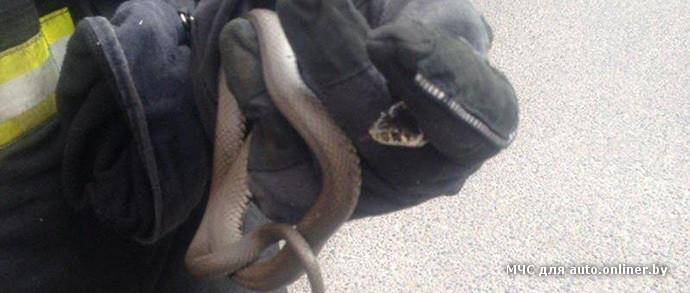 Фотофакт: столичный водитель Volkswagen испугался ужа, забравшегося в салон