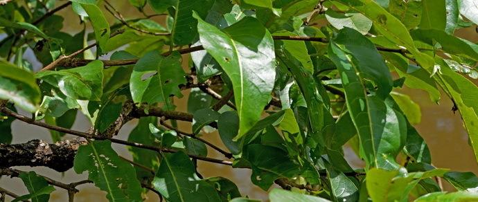 Природная иллюзия. Найди лягушку в листве