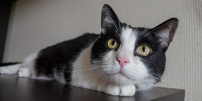 Найдите кота в Каталоге — и выиграйте приз!(дополнено)