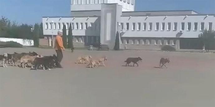 В Марьиной Горке зоозащитник вывел 50 собак к райисполкому для переговоров