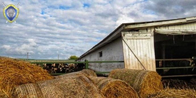 В Гродненской области бык напал на скотника. Через несколько дней мужчина умер