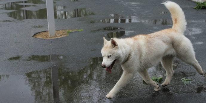 В Минске собаки умерли с подозрением на химическое отравление. В «Минскзеленстрое» сказали, что никаких обработок травы не проводят