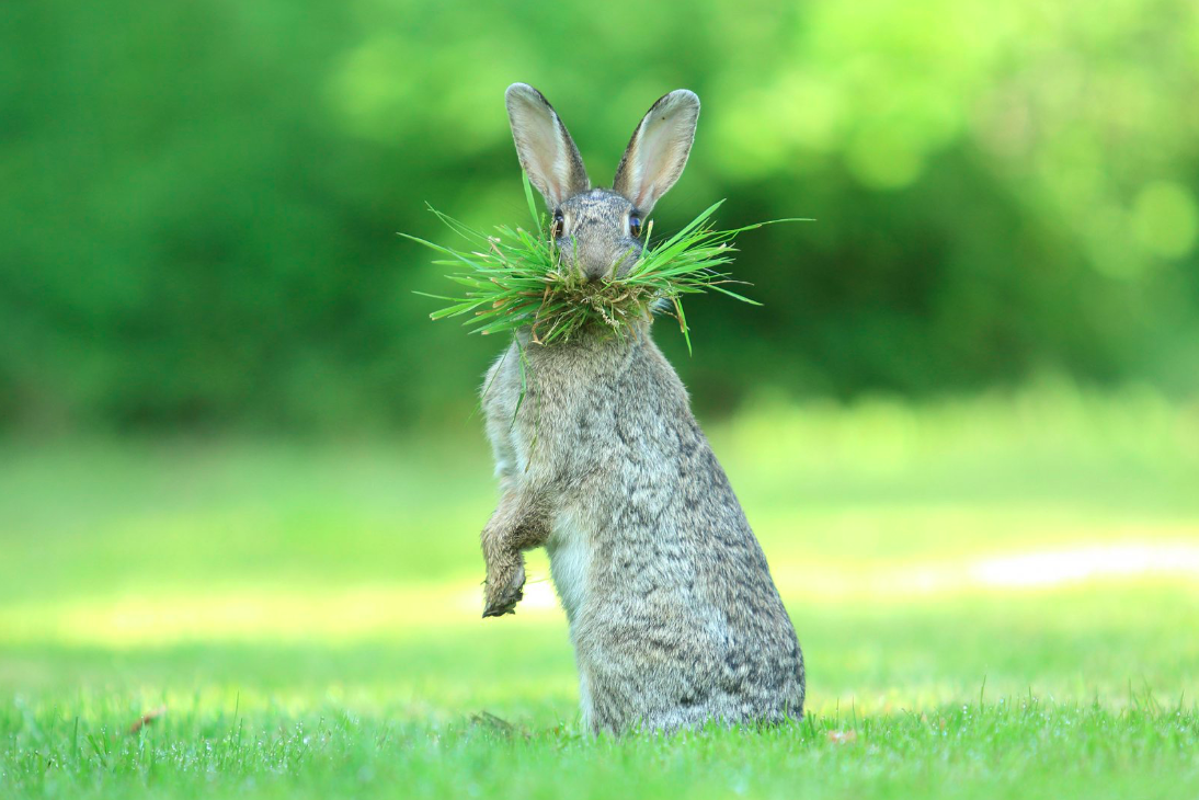 смешные кать картинки зайцев поделиться простым вкусным