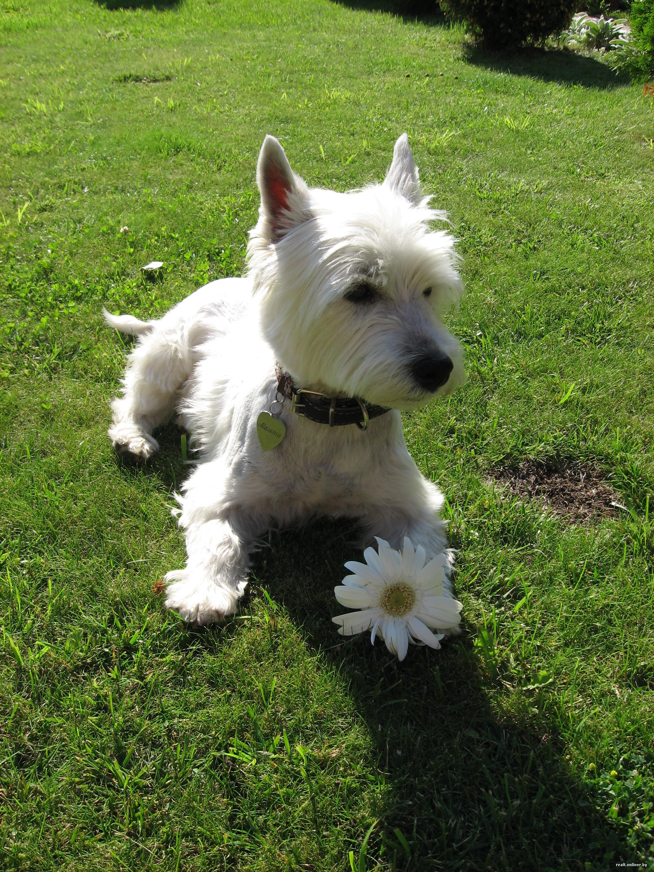 Стала раком штоб пес засадил фото 545-228