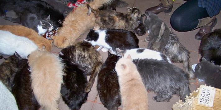 Картинки по запросу 45 котов