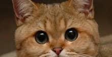 «Бил котят, кошек, вследствие чего они умирали». Минчанам вновь отказали в возбуждении уголовного дела против возможного живодера